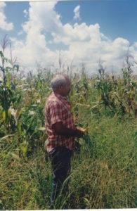 Cuba campo